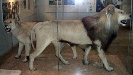 leon del cabo